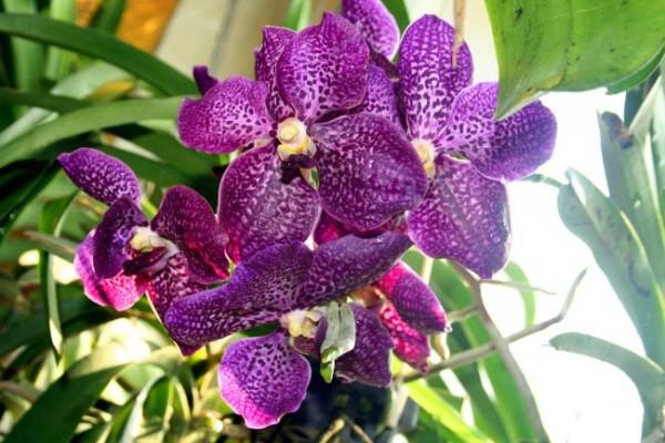 Орхидея: особенности ухода, выбор грунта, пересадка